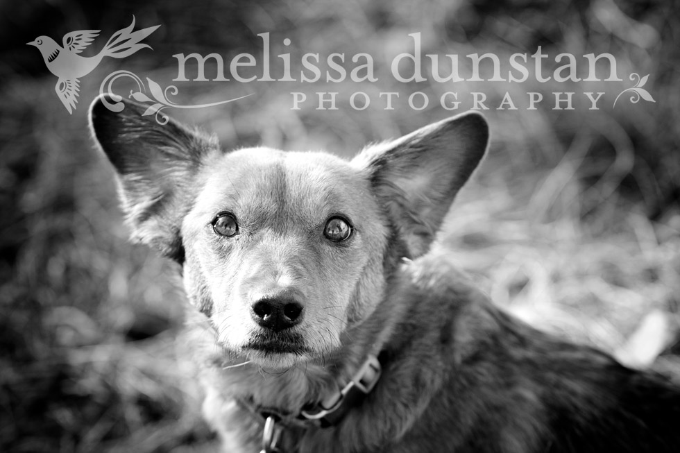 Arizona Dog Pet Photography
