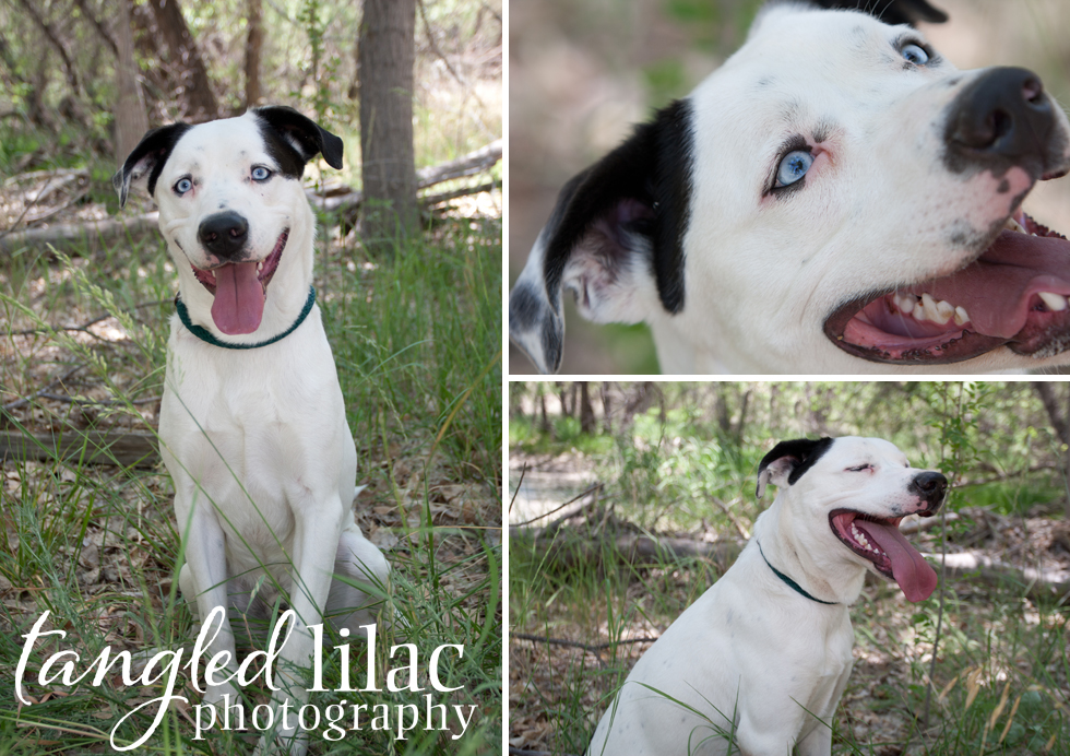 Rescue Dog Pet Photography