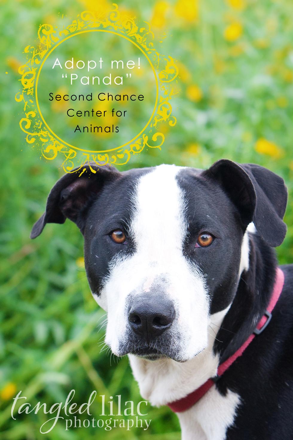 Arizona Dog Photography
