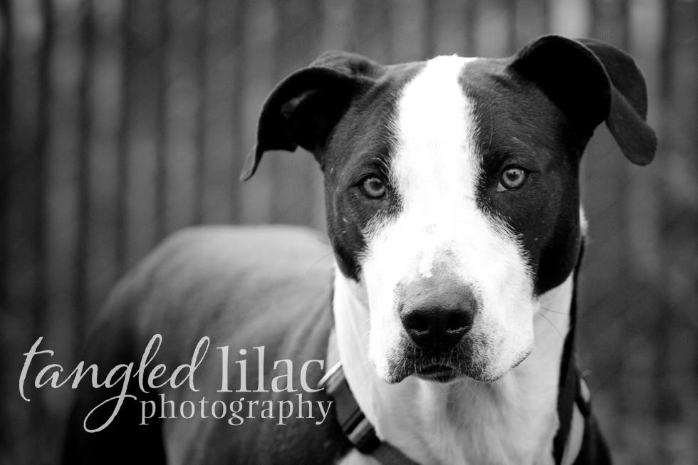 Arizona Dog Photographer