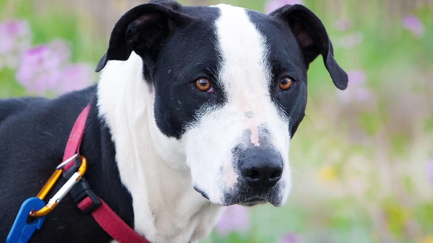 Flagstaff Pet Photography