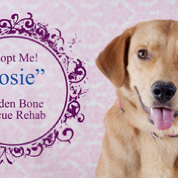 Rescue of the Month from Golden Bone Rescue Rehab {Adopt Josie!}