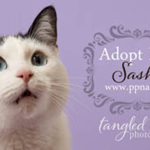 Adorable Adoptable of the Month! Meet Sasha the Cat {Flagstaff Rescue Pet Photography}