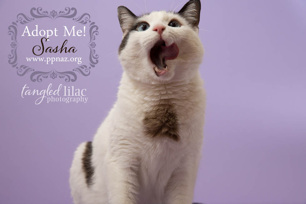arizona cat photography