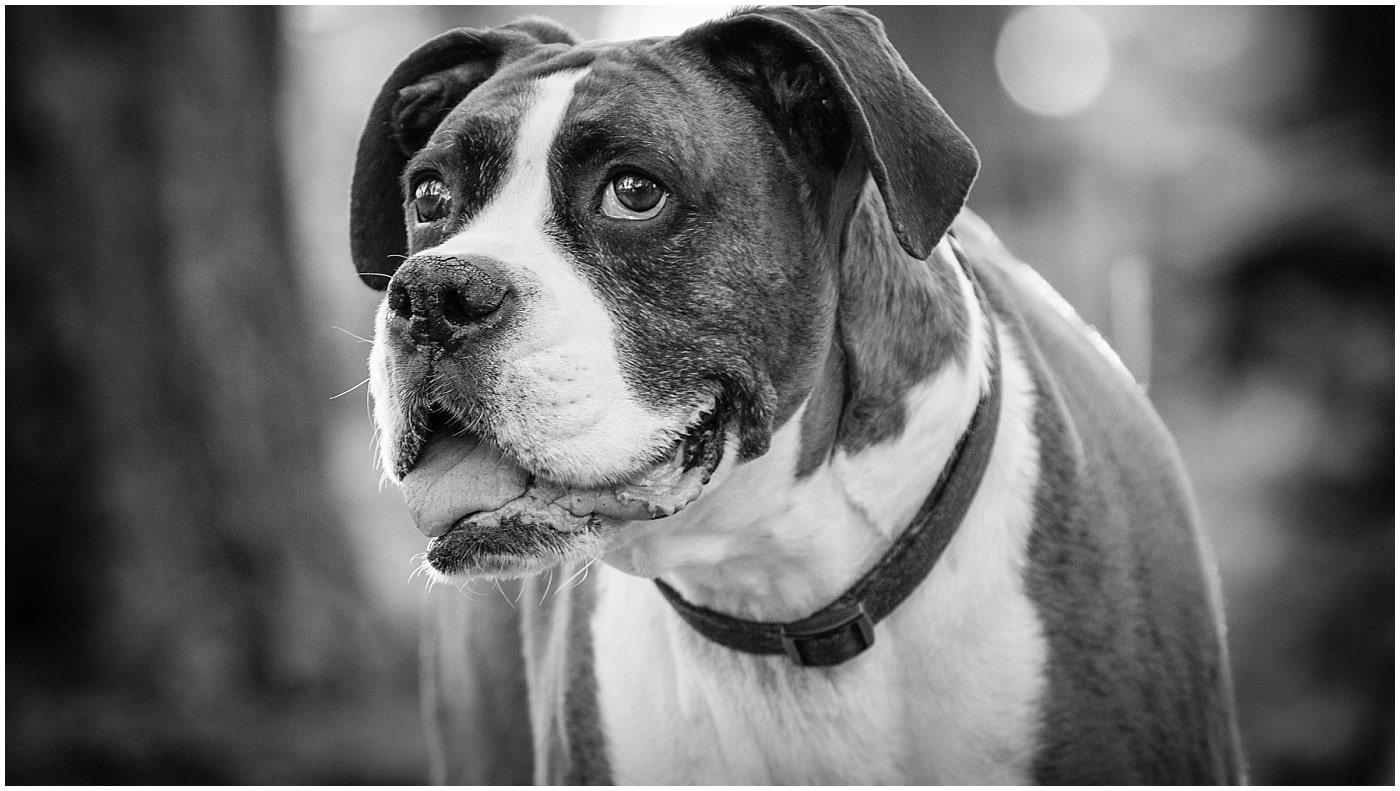 Pet Photography Flagstaff