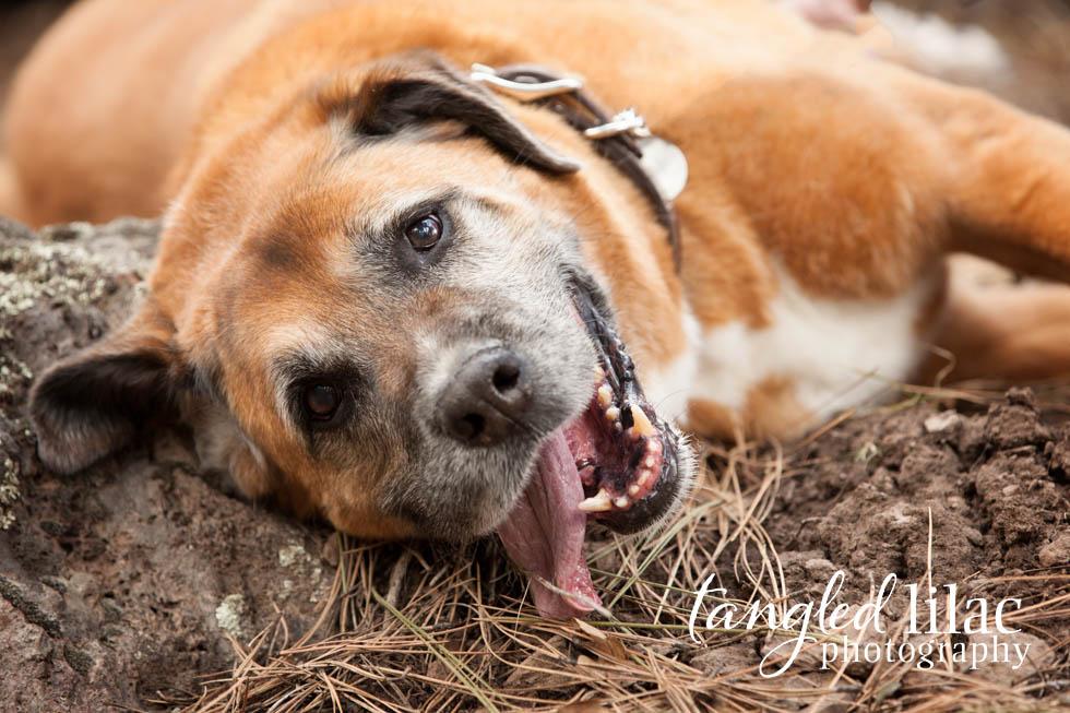 Flagstaff-Sedona-Pet-Photography-2001
