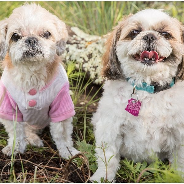 Daffney & Family {Flagstaff Pet and Family Photography}