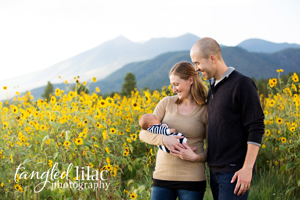 outdoor-sunflowers-newborn-baby-flagstaff