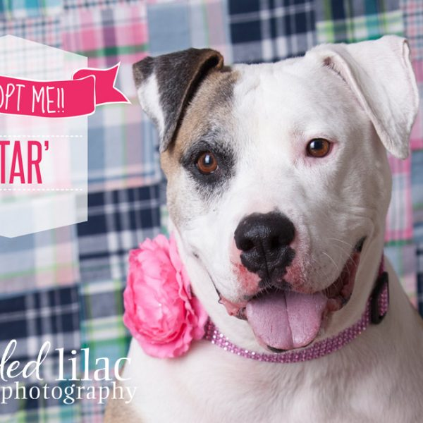 Adopt Star!  {Arizona Rescue Dog Photography}