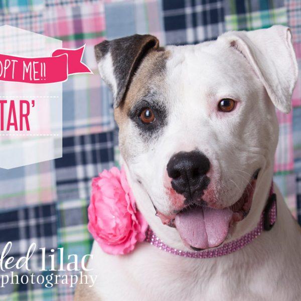 Adopt Star!  {Arizona Rescue Dog Photography}