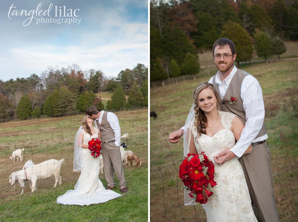 014-barn-wedding-goats