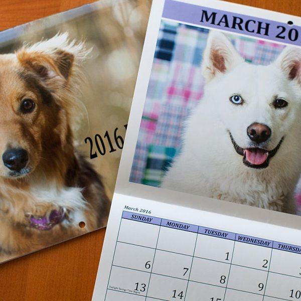 Mora and Nesbah {Flagstaff Pet Photography}
