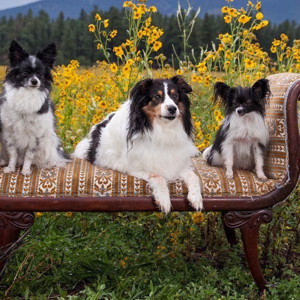 Oswald {Flagstaff Pet Photographer}