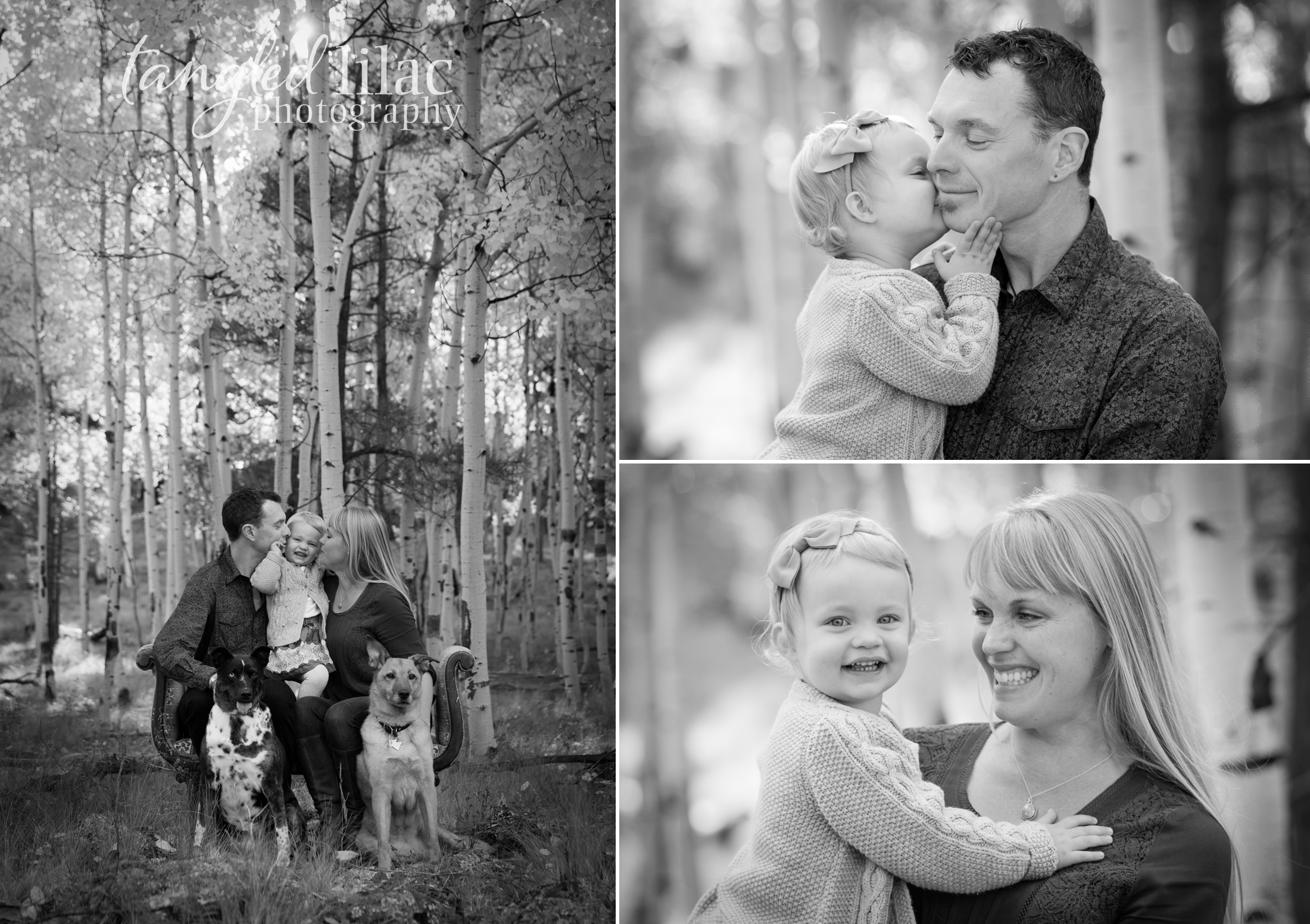 099-flagstaff-family-photographer-aspens-dogs-pets