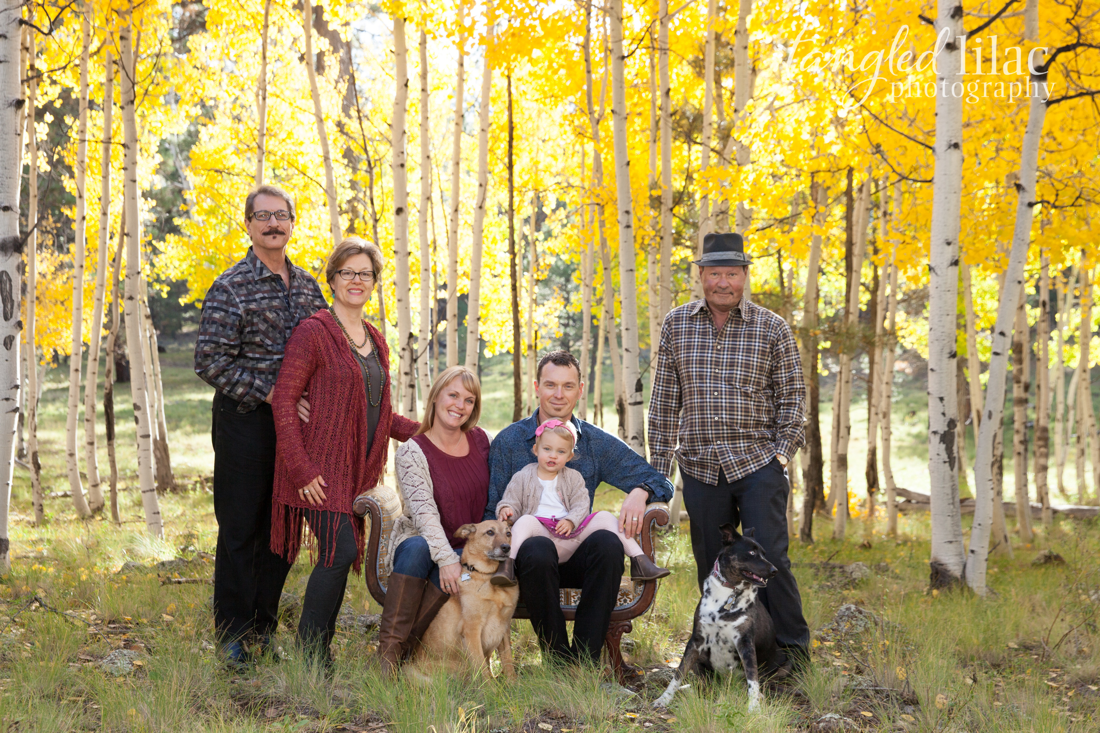 100-flagstaff-family-photographer-aspens-dogs-pets