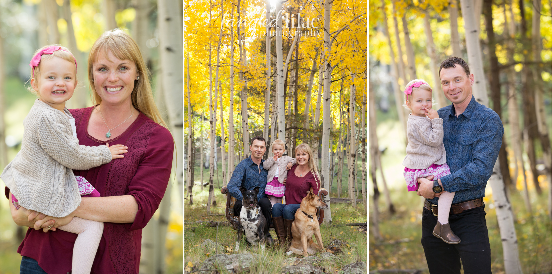 106-flagstaff-family-photographer-aspens-dogs-pets