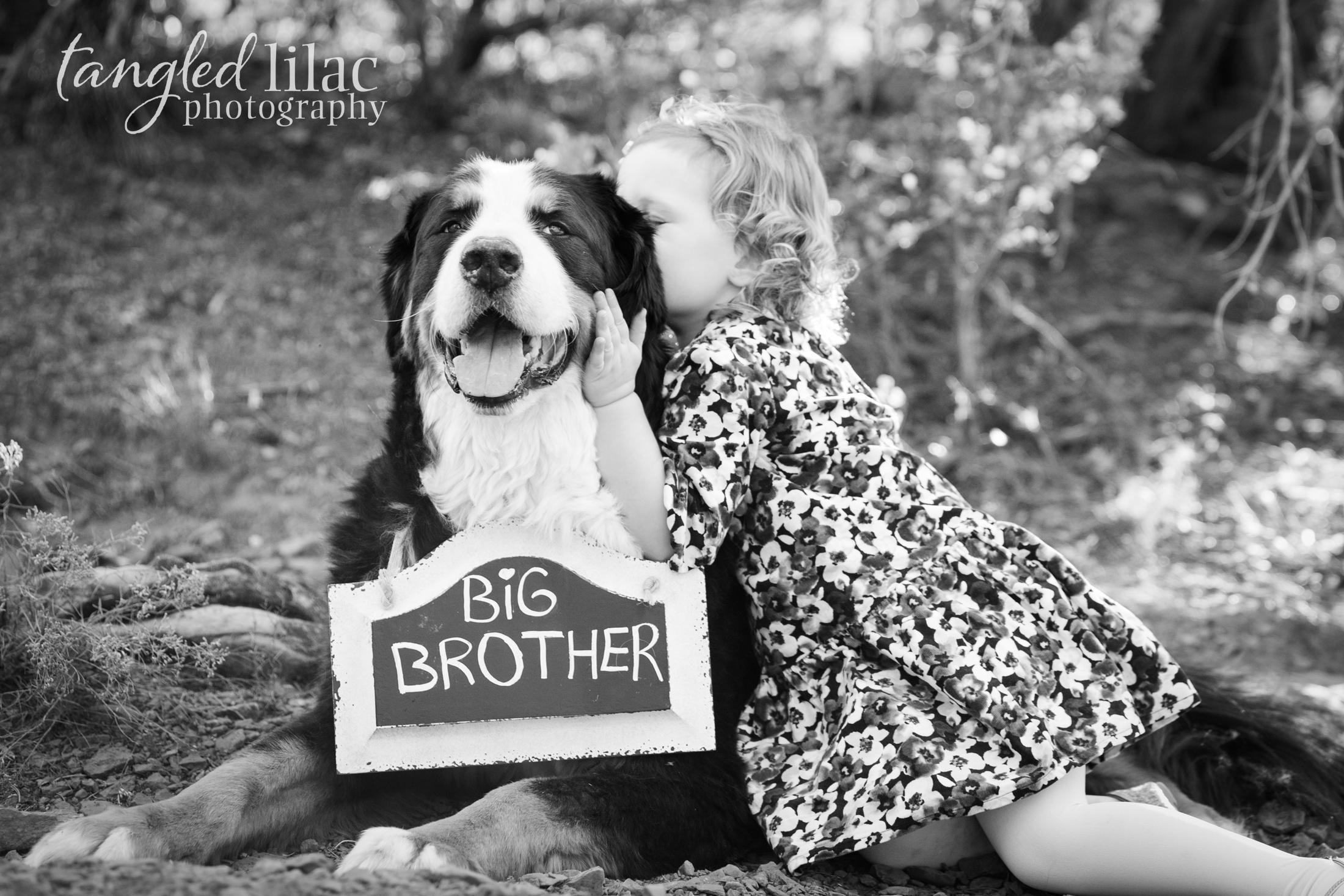 107-sedona-family-photographer-maternity-pet-dog-bernese-mountain-dog