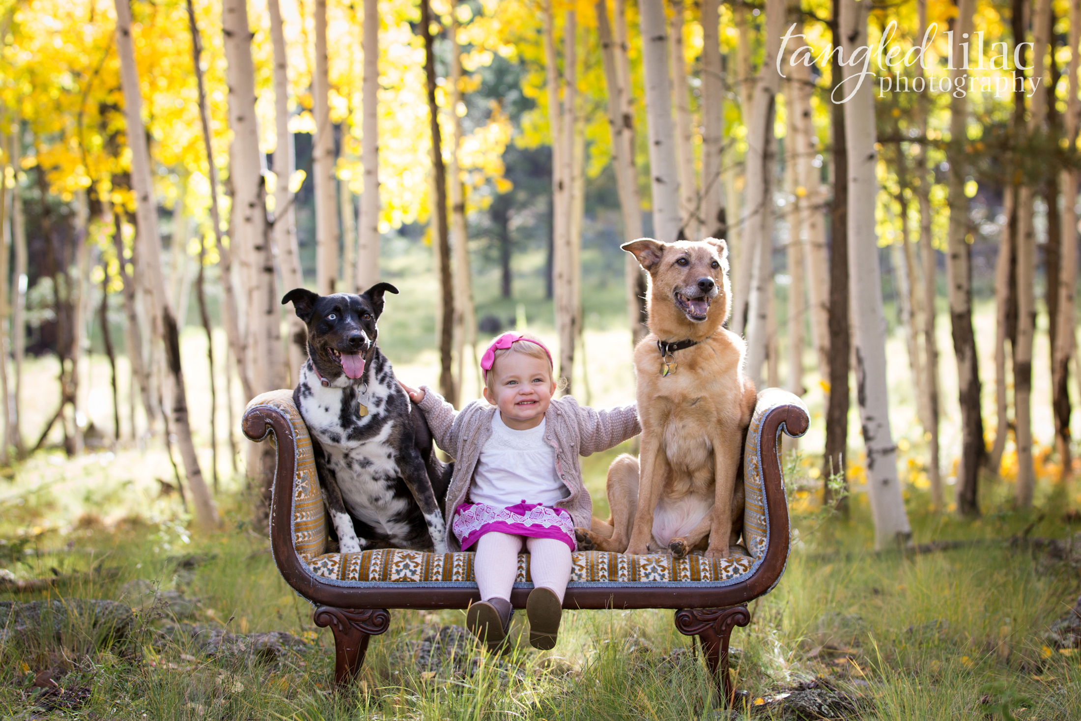 109-flagstaff-family-photographer-aspens-dogs-pets