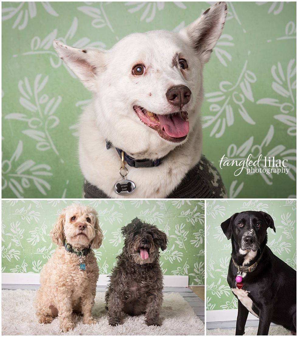 Flagstaff Pet Portraits