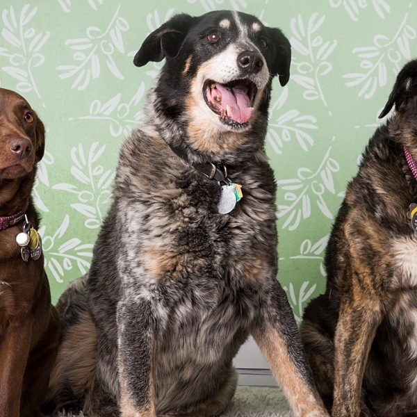 Valentails Photo Fundraiser {Flagstaff Pet Photography}