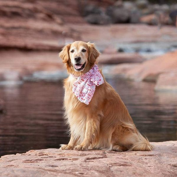 Izzy the Dog at Slide Rock State Park