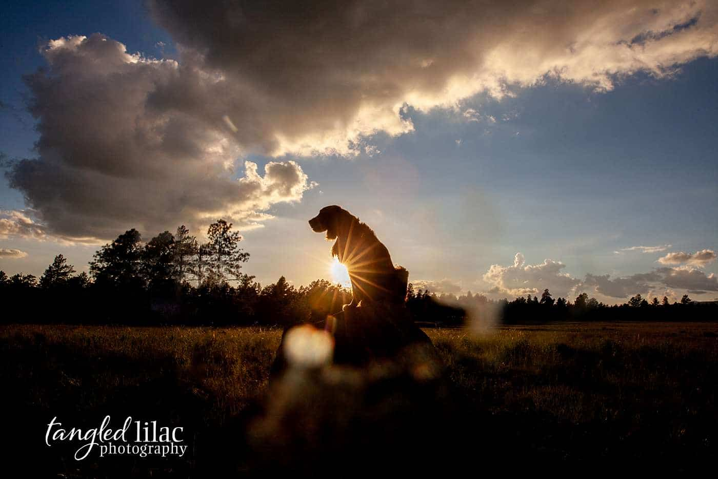 A moody dog portrait at sunset using the body as a silhouette