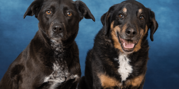 Valentails Pet Portrait Fundraiser 2021 – HOW TO RESERVE YOUR APPOINTMENT
